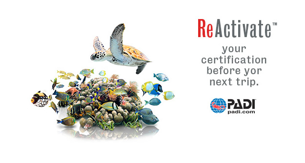 Reactivate your PADI Certification